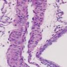 Clear-Advantage Xylene Substitute | Polysciences, Inc.